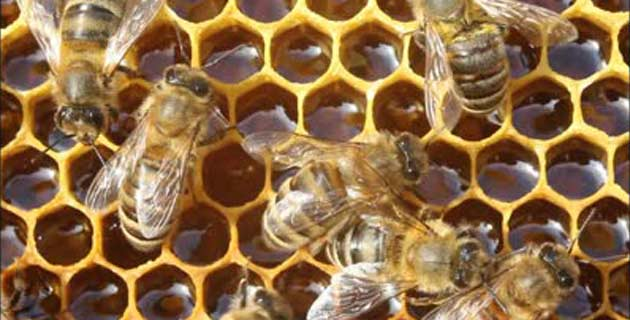 creating jobs through honey production